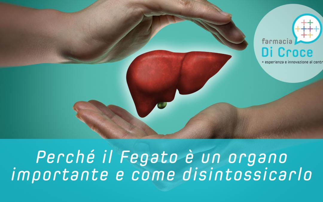Perché il Fegato è un organo importante e come disintossicarlo